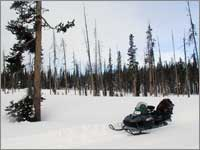 Forest clearing at snowpack-sampling site near Lewis Lake Divide, Wyo.